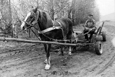 конь с телегой картинка