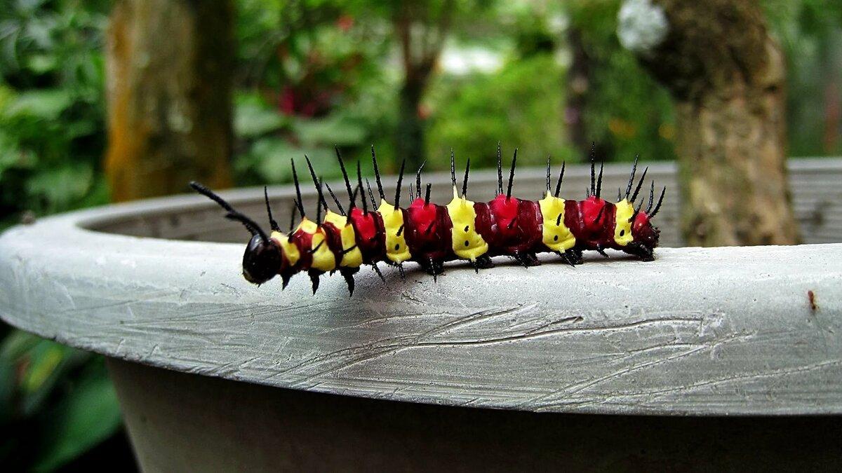 Цветная гусеница картинка