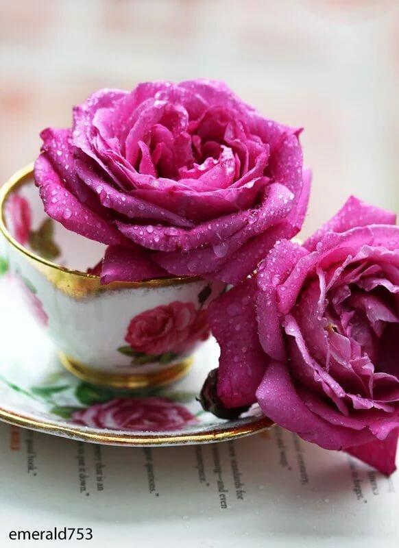 доброе утро картинки розовые розы ирины