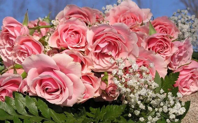 Ты прекрасна картинки, роза вода днем