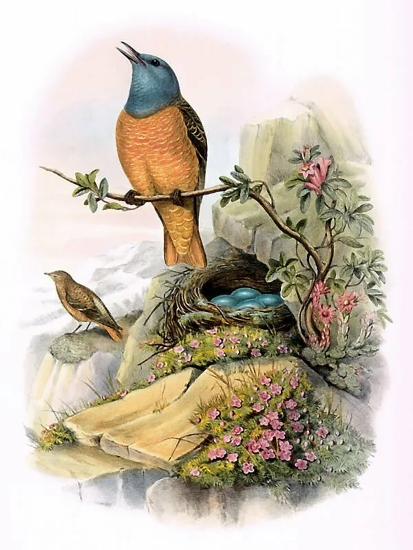 Картинки для декупажа птички