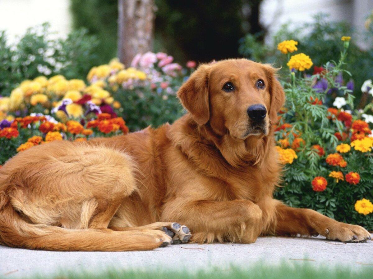 Картинки, картинка с псом