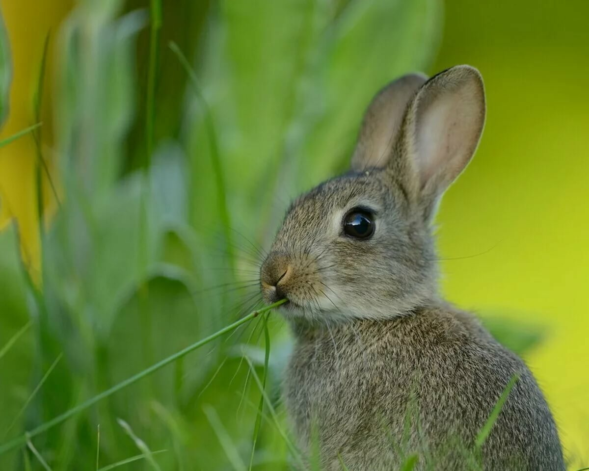 Картинки зайца, про