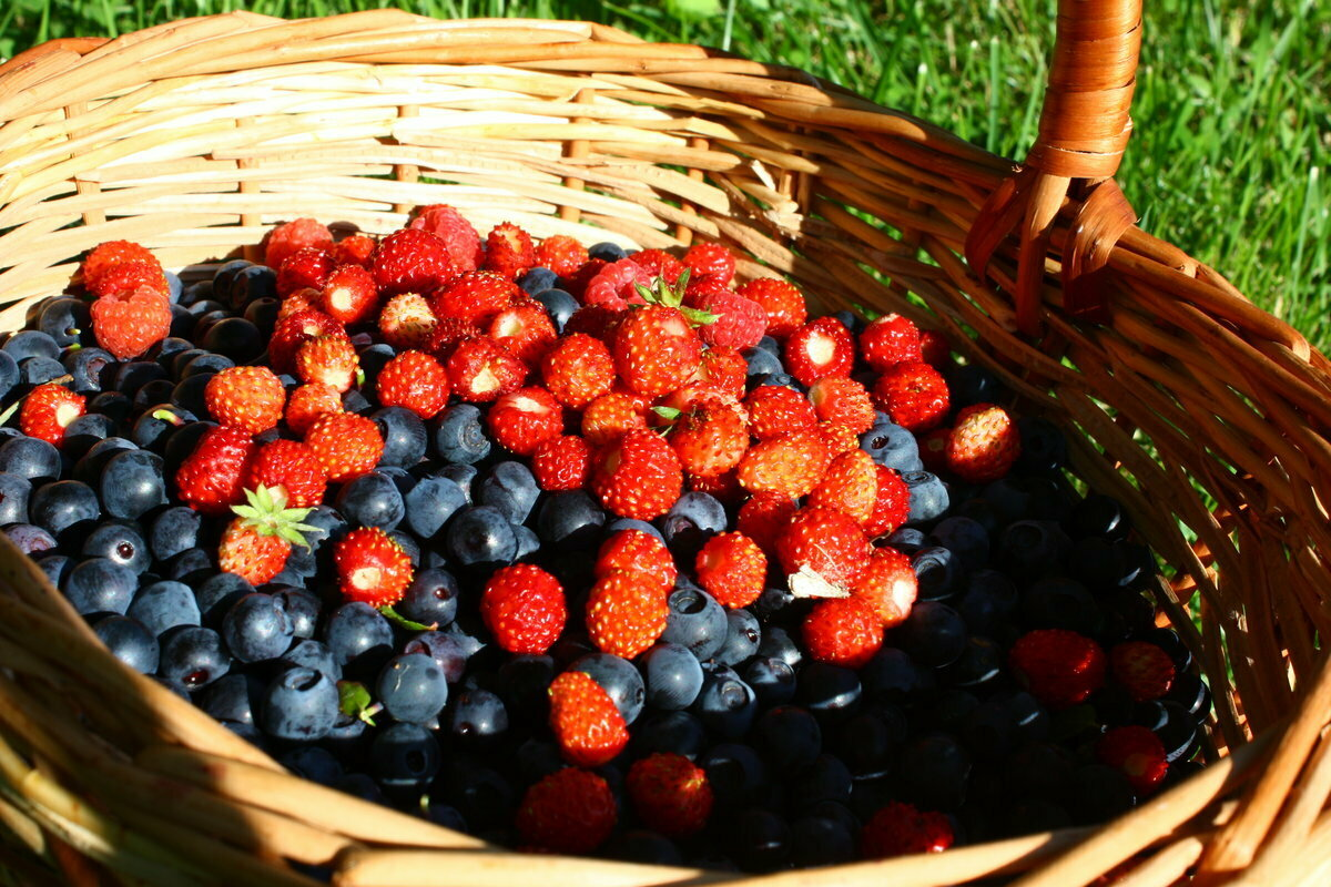 ягоды в картинках их сборка
