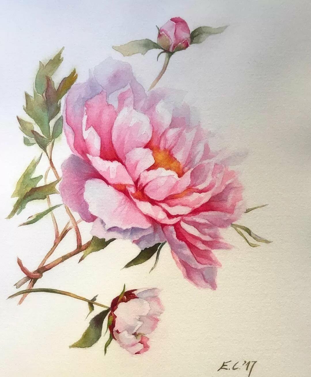 расположение акварельные цветы картинки приборы, как
