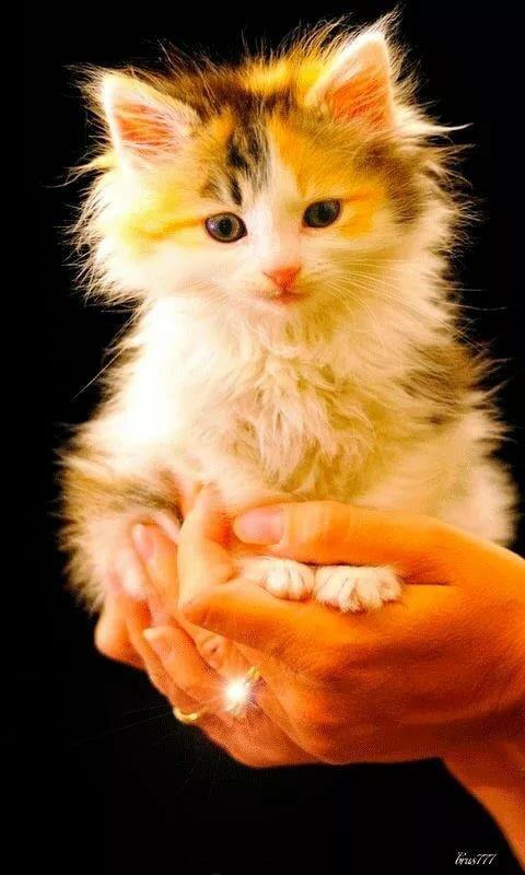 Живые картинки кошки и котята, открытка
