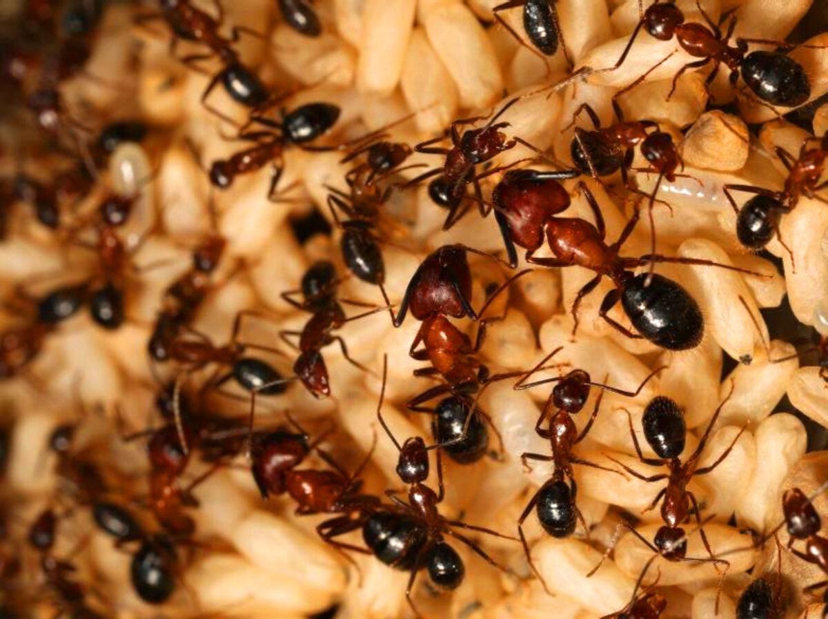 семьи муравьев картинки подобрали