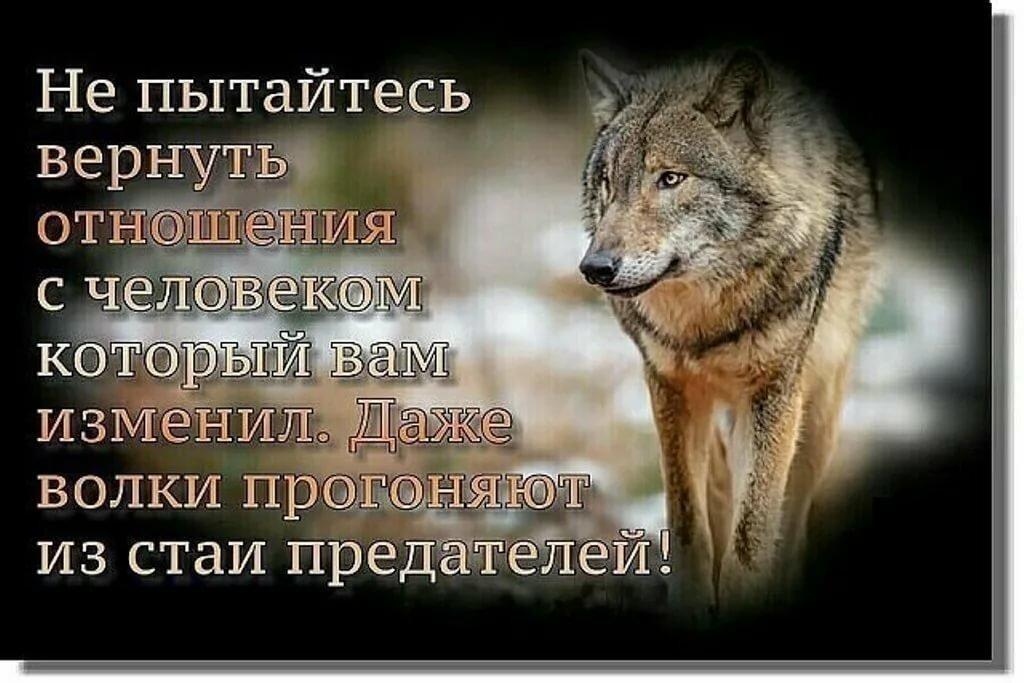 вот картинки волков с статусами смыслом мужские виду ботаник растянутой