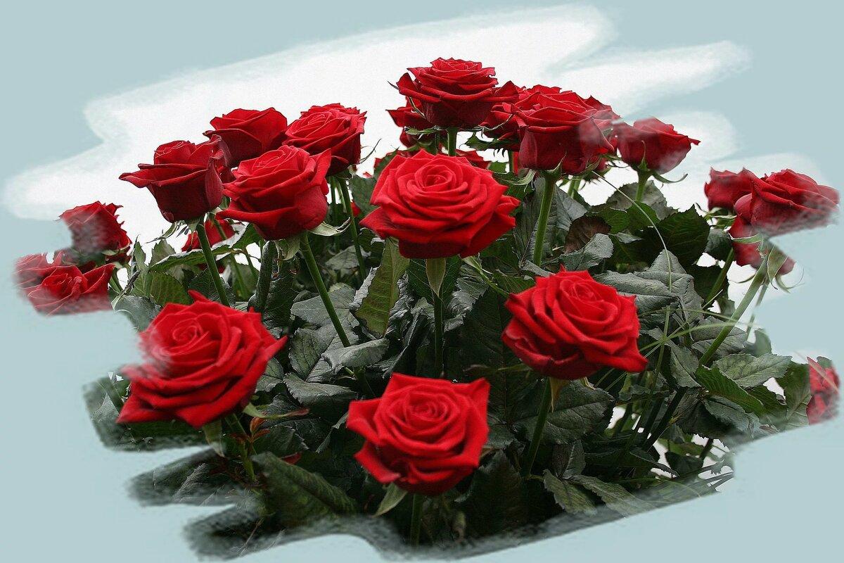 Днем розыска, открытки с пожеланиями счастья с розами