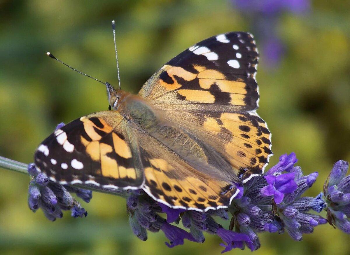 Мир картинки с бабочками