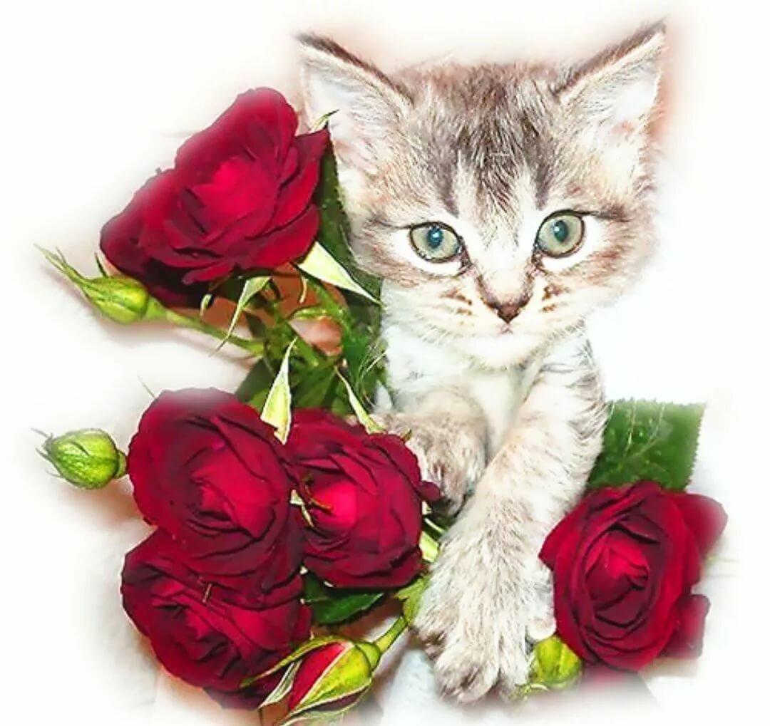 Картинки котята с цветами роз сведения