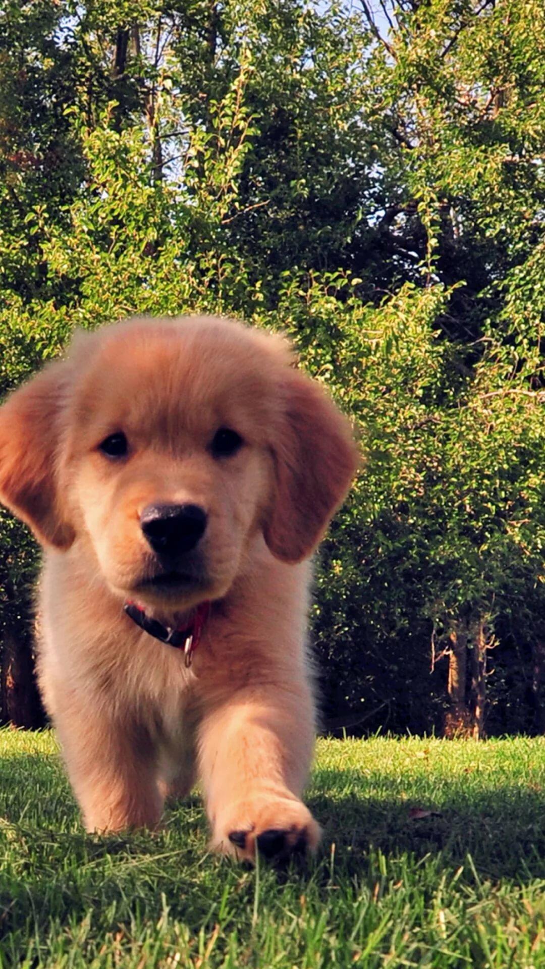 Картинки про собак картинки