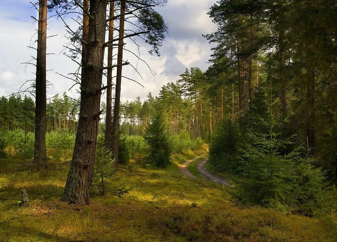 эксперимент, качественные фотографии российского леса чугунов