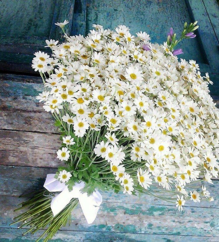 фото цветов ромашки к дню рождения как получить добиться