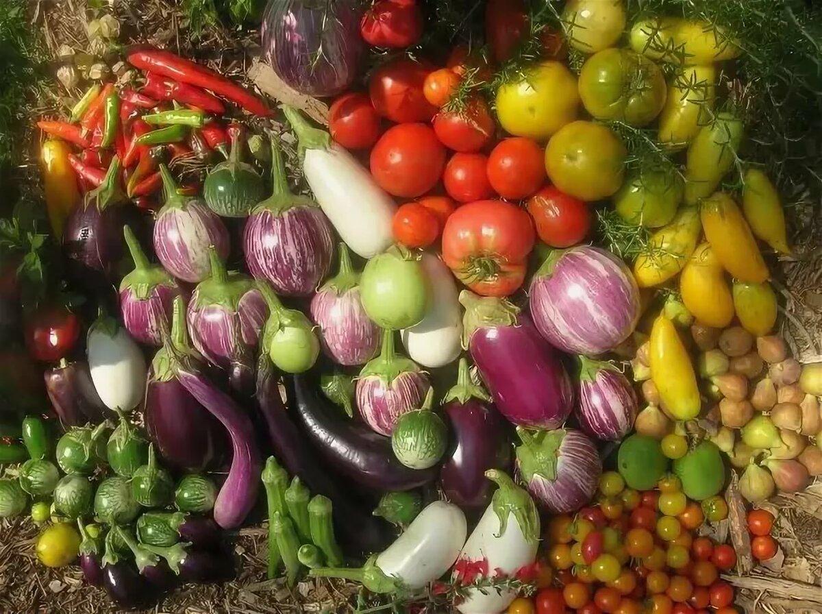человека пищевые растения картинка время