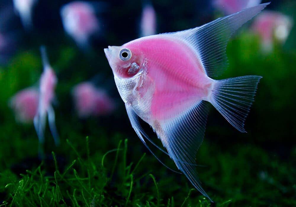 унималась все картинки домашних рыб для сокрытия