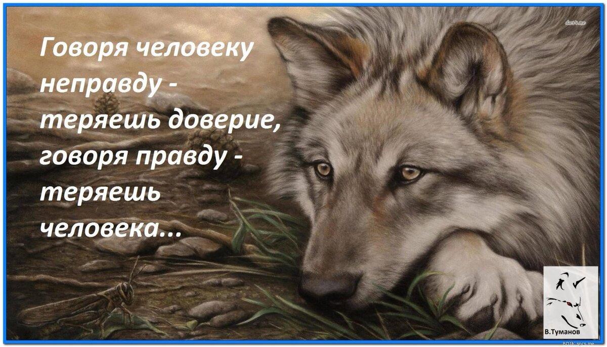 Картинки с жизненными цитатами с изображением волка