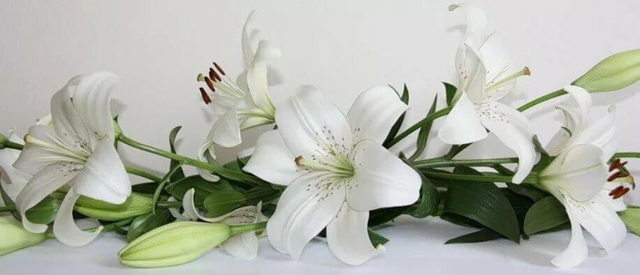 Открытку, открытки с цветами лилий