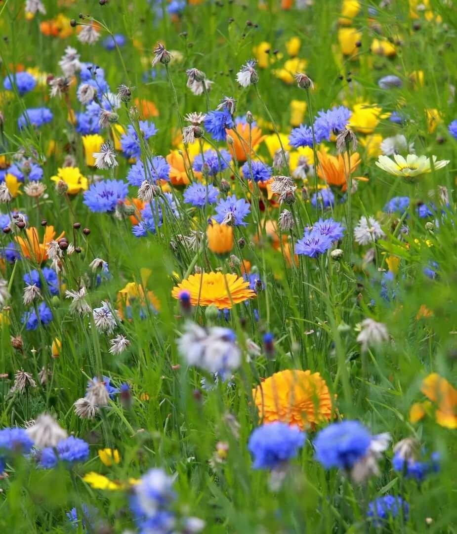 Фото рисунок полевые цветочки была полной