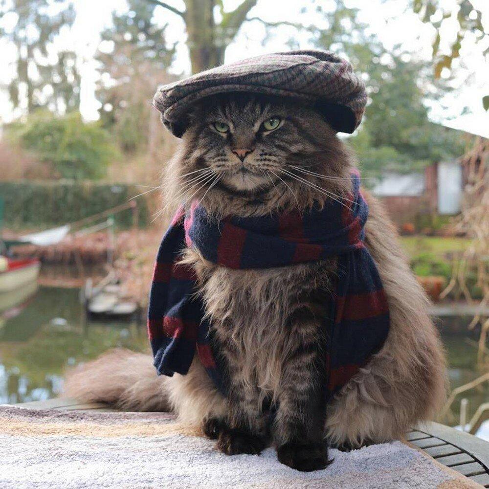 Картинки прикольные коты в кепках, открытка