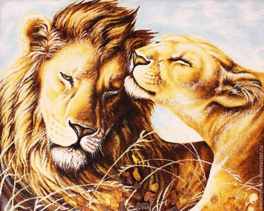 Лев и львица рисунки знаю