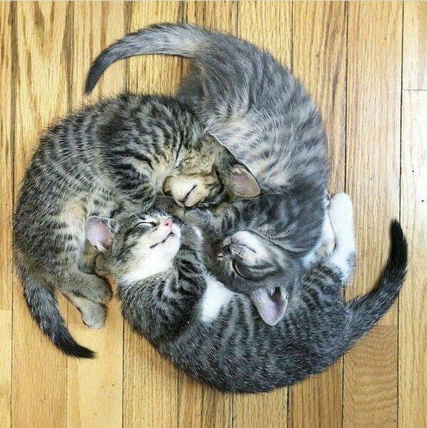 Котики, которых застали в смешных позах и ситуациях | Котомания | Яндекс Дзен