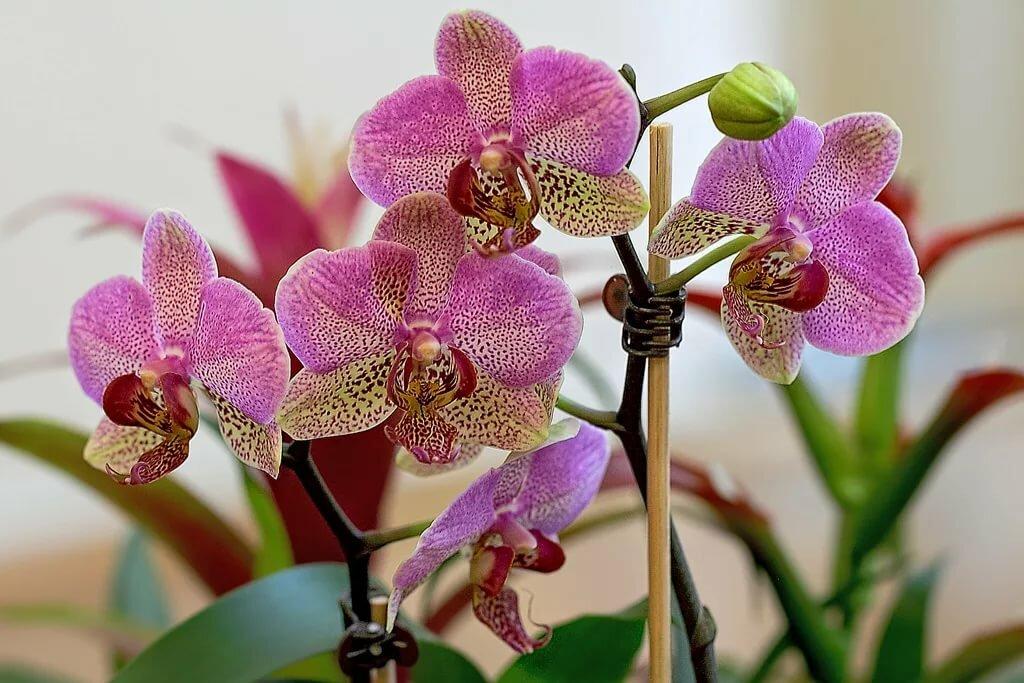 салон разновидности орхидеи картинки и названия знали