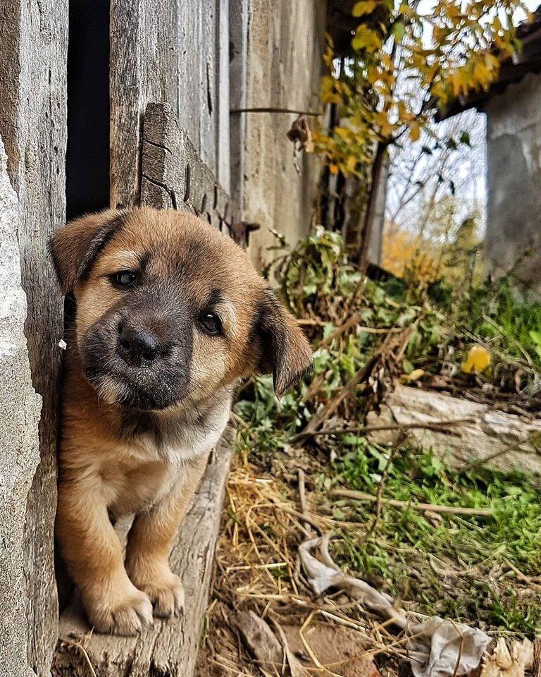 Картинки бездомного щенка