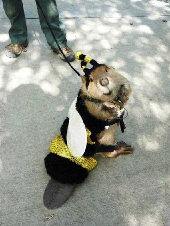 Ребенка месяцем, картинки приколы пчелы