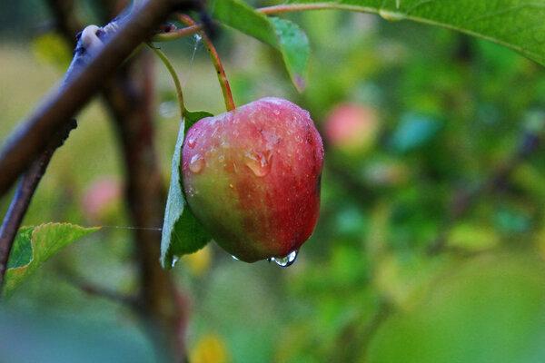 время плодов