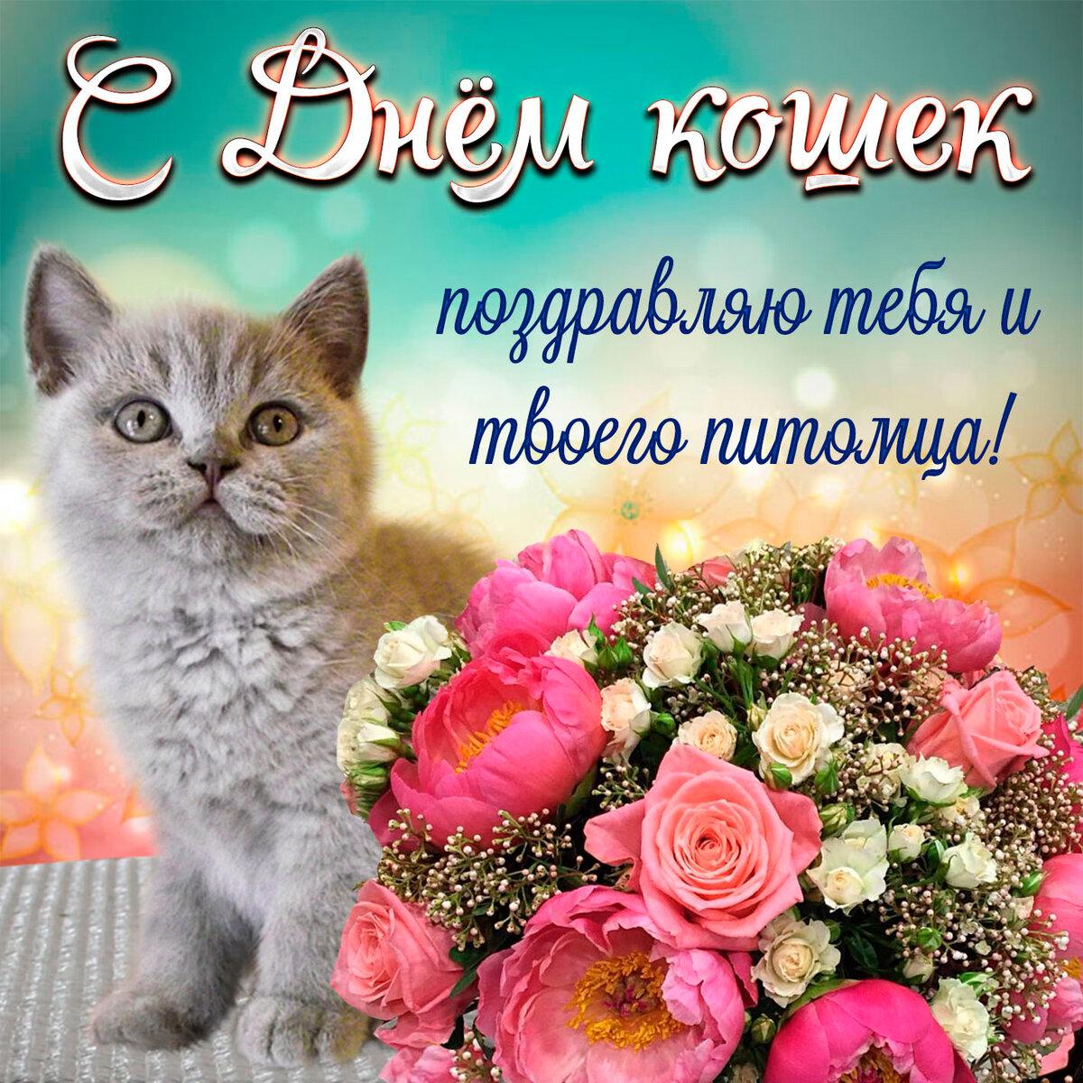 Поздравления в картинках кошки, днем рождения имени