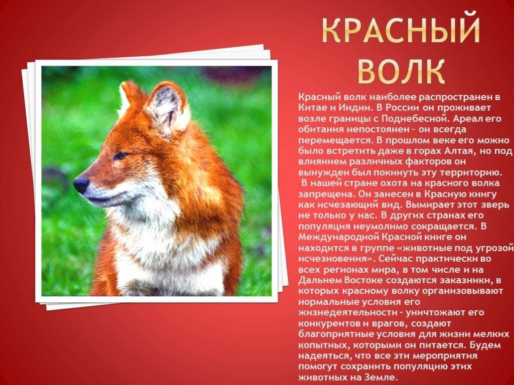 Все животные красной книги и их картинки