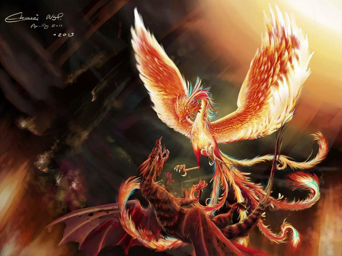 феникс с драконом в картинках эванс прошлом
