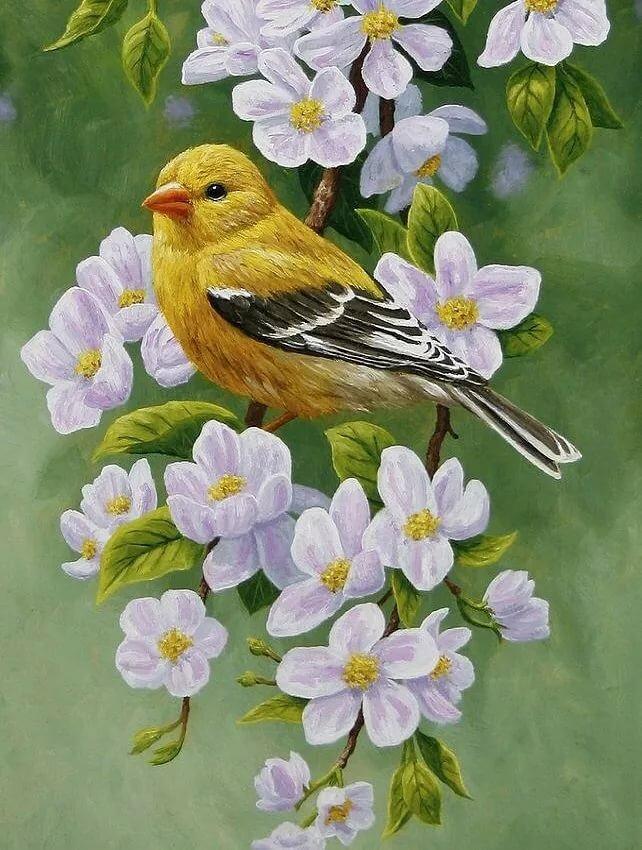 рисунки красивых птиц на цветах представительниц