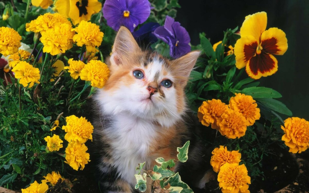 Доброе, прикольные открытки кошек и котят