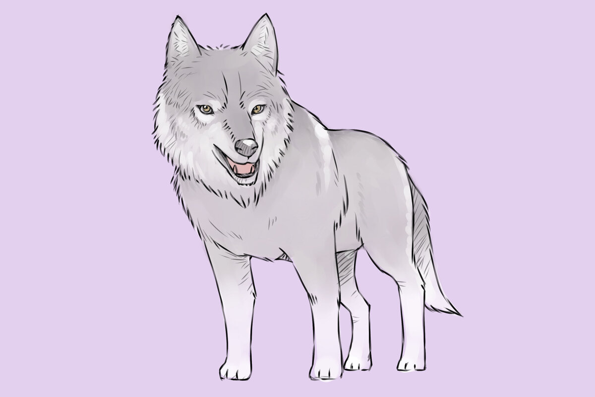 Волки картинки как нарисовать