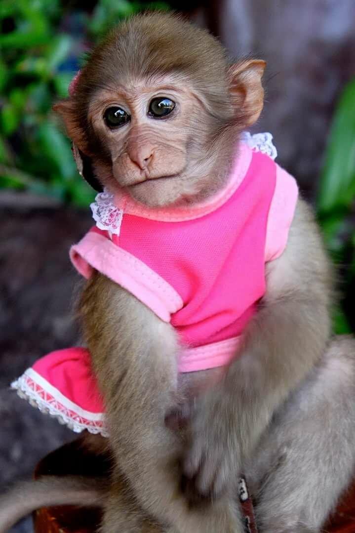 красивые обезьянки фото правило это