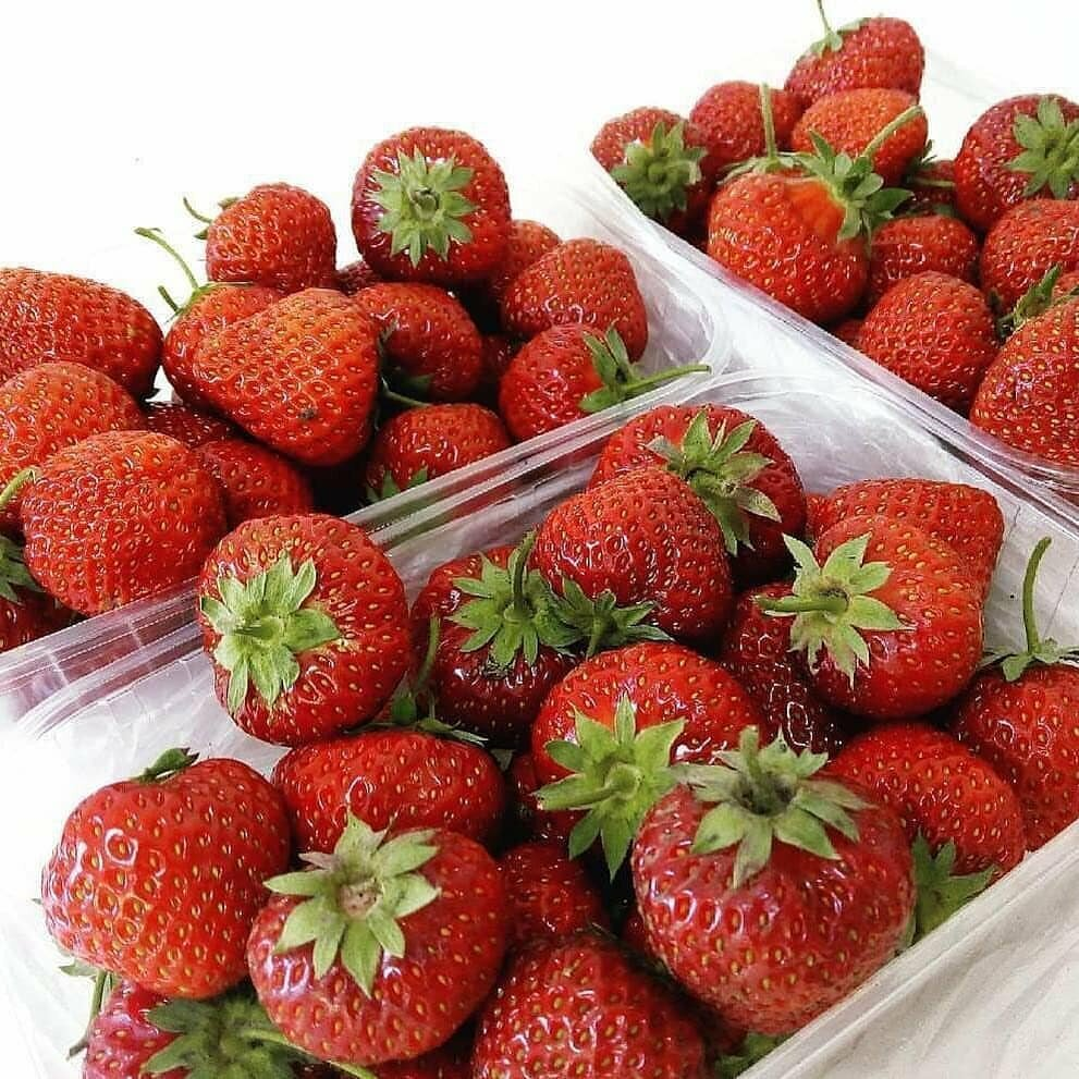 Домашняя ягодница клубника и земляника в Черноголовке