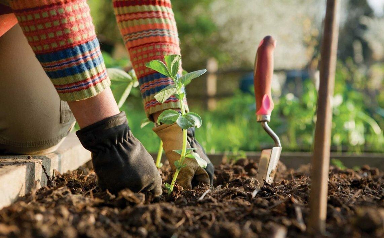 Картинки для детей работа в огороде весной высадка рассады, маме картинках для
