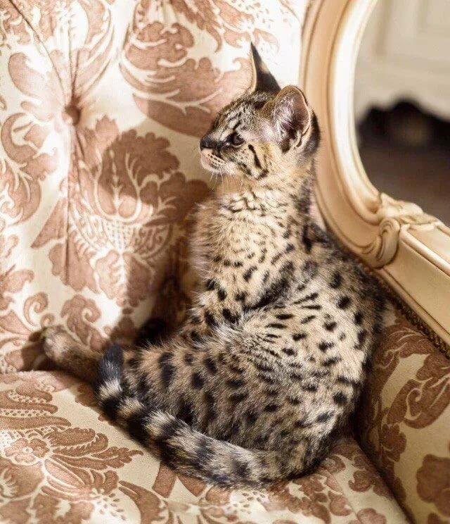 Фото ашера королевской