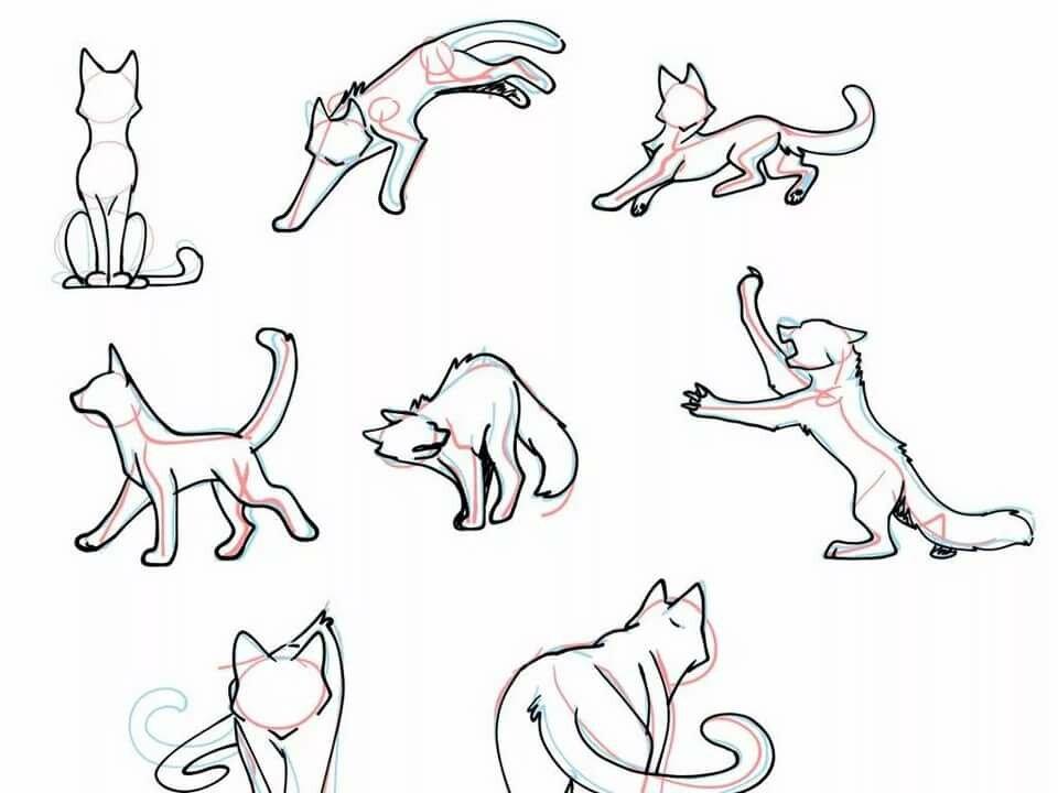 действительно картинки туториалы коты него может быть