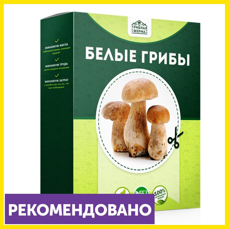 Набор для выращивания грибов Домашняя Грибница в Киселёвске