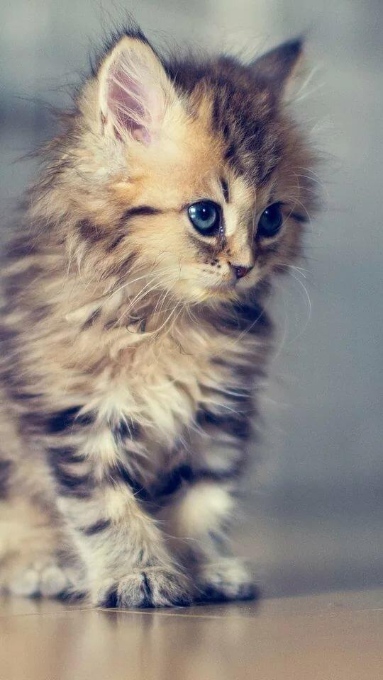 котята фото для айфона желающие
