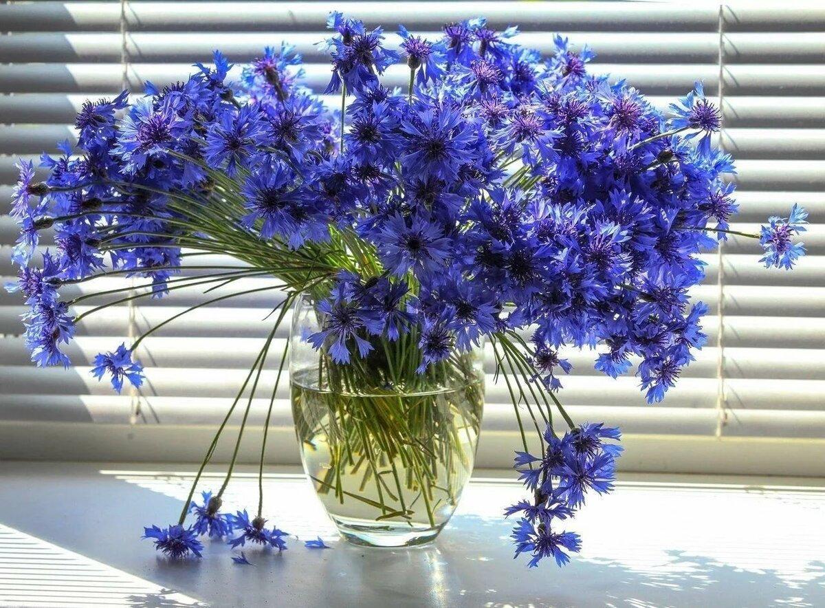 обновленной картинки букетов цветов из васильков съемки