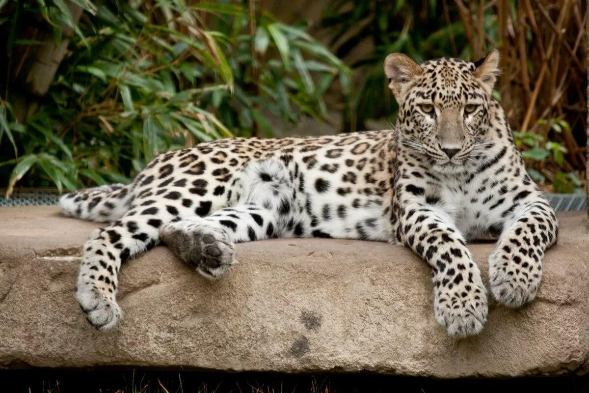 Смотреть картинки животные красивые