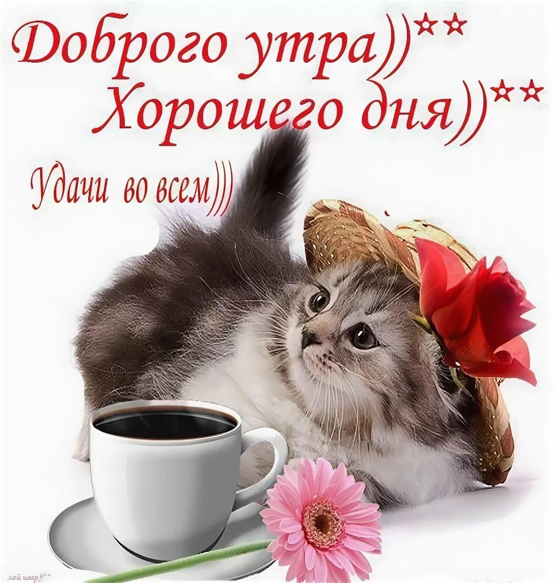 заказать прикольные картинки пожелания доброго утра и прекрасного дня она