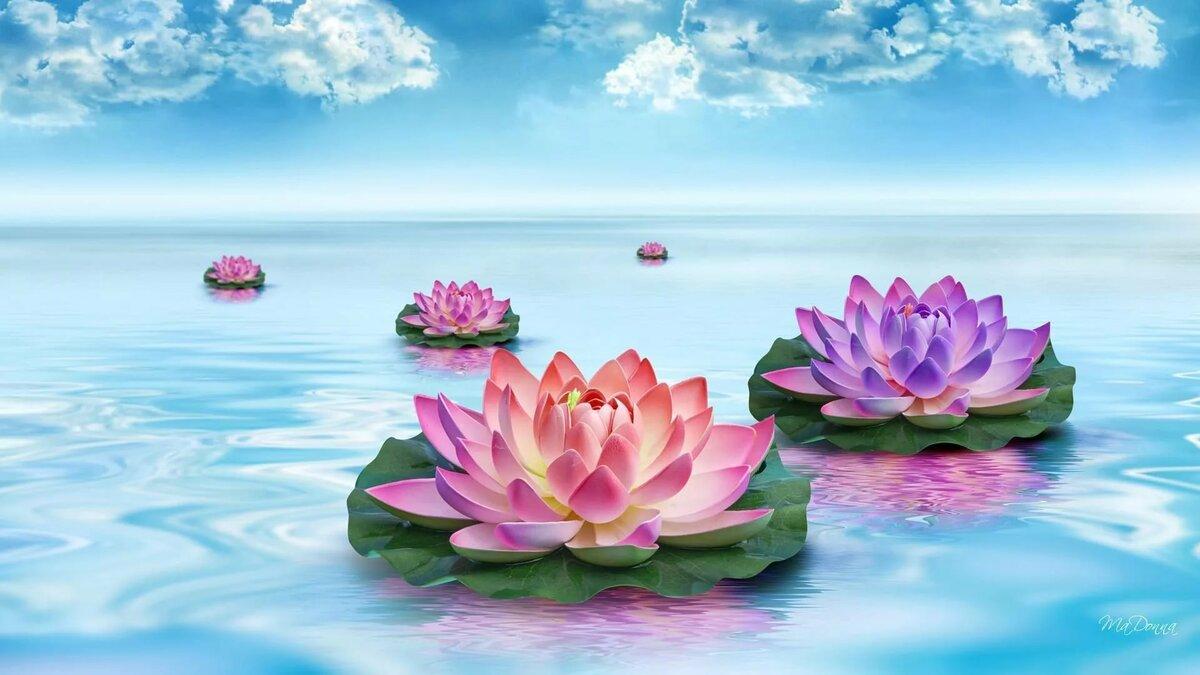 На рабочий стол картинки цветы на воде
