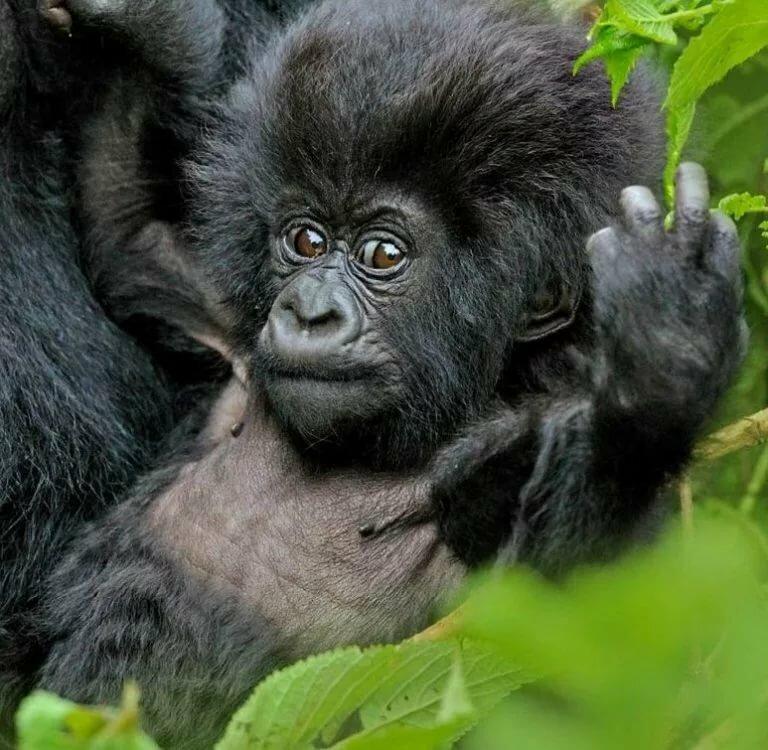 Фотки самых смешных животных в мире