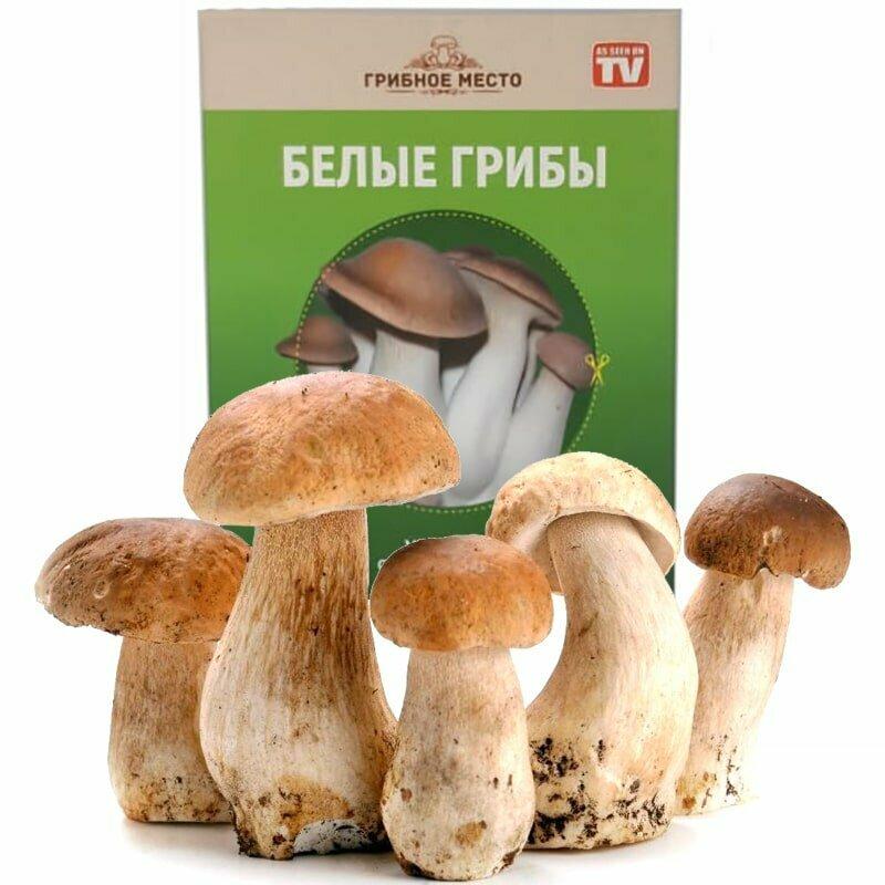 Набор для выращивания грибов Домашняя Грибница в Артёме