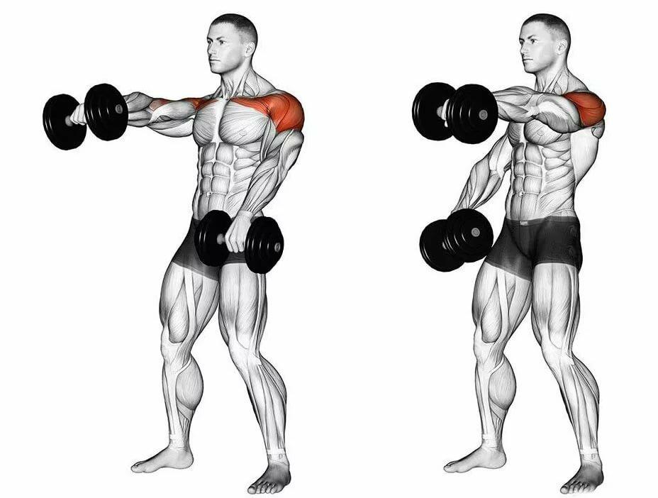 Правильные упражнения с гантелями в картинках